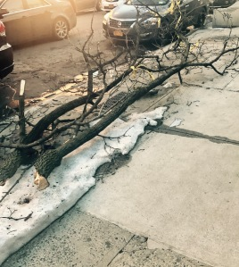 A huge tree limb lying on the sidewalk.